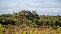 Heathland scenary with trees and bushes