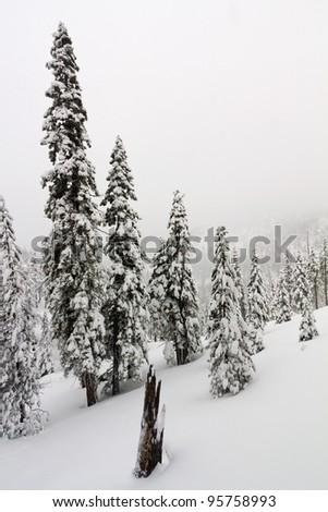 Heavy blizzard dumps snow and creates a winter wonderland near Lake Tahoe California/Nevada