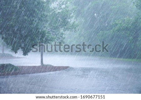 Photo of  heavy rain and tree in the parking lots