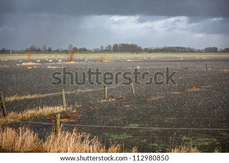 Heavy rainfall flooding  a farm field used as floodplain in the Netherlands