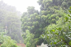 Heavy raining in the asian tropical forest