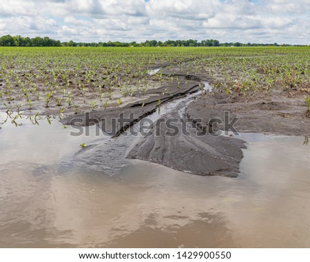 Heavy rains and storms in the Midwest have flooded fields causing corn crop damage