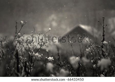 heavy snow falling in a cold december day with house in background