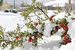 Heavy snow in Neve Daniel, Gush Etzion, Israel. Winter 2013