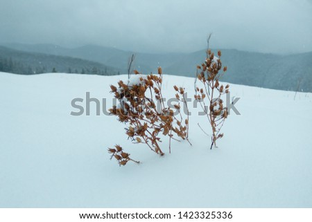 Heavy snowstorm with gray sky and lots of snow in the mountains. Dried plant in the mist of gray clouds at the top of the mountain. #1423325336