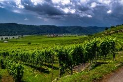 Heavy Thunderclouds Over Vineyards In Wachau Danube Valley In Austria