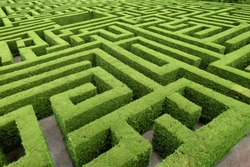 Hedge cut into a maze like puzzle pattern forming a garden labyrinth