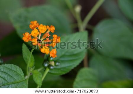Hedge flower at garden #717020890