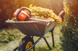 Hedge Trimmer close up. Hedge trim on garden wheelbarrow. Garden work by sunset.