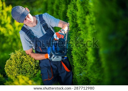 Hedge Trimmer Works. Gardener with Gasoline Hedge Trimmer Shaping Wall of Thujas. Photo stock ©