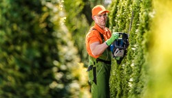 Hedge Trimming Job. Caucasian Gardener with Gasoline Hedge Trimmer Shaping Wall of Thujas in a Garden.
