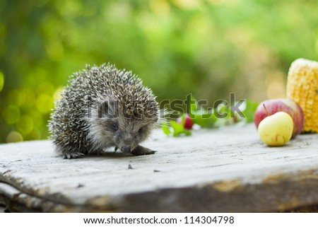 Hedgehog among fruits - stock photo