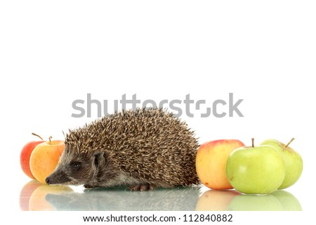 Hedgehog and apples, isolated on white