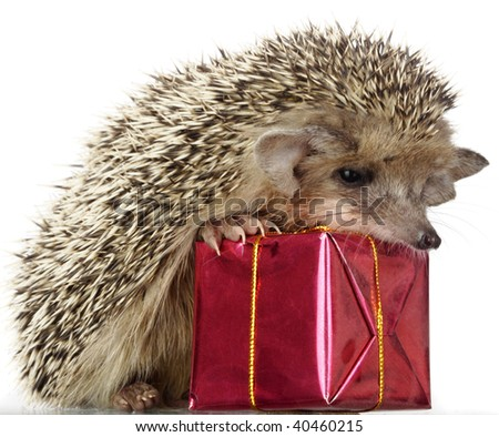 hedgehog and gift