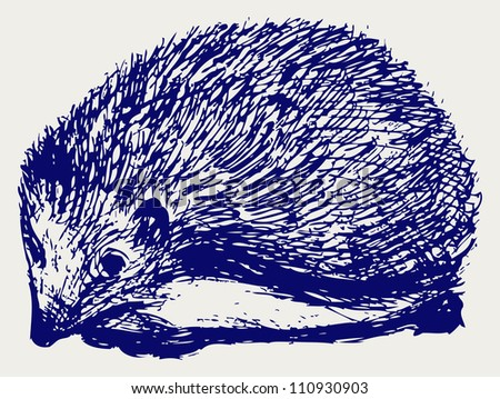 Hedgehog animal. Raster