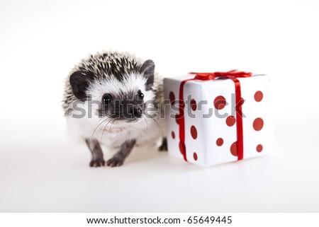 Hedgehog christmas, Santa Claus