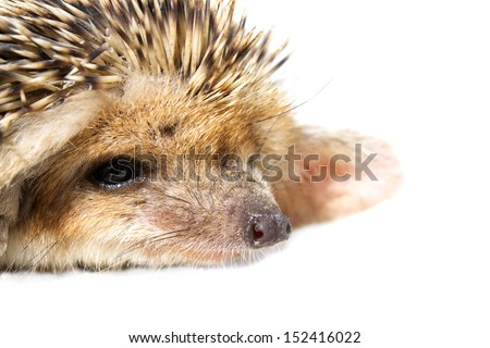 hedgehog on the background