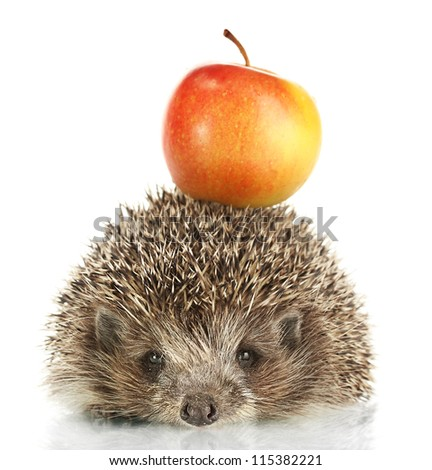 Hedgehog with apple, isolated on white