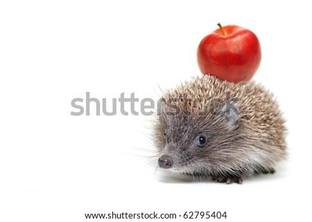 Hedgehog with apple isolated on white background