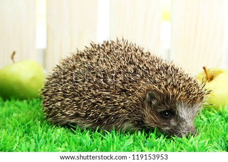 Hedgehog with apples, on grass, on fence background