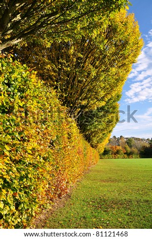 Hedgerow and Trees in a Public Park in Autumn
