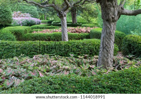 Hedges, plantings and trees create a repetitive pattern in this formal garden; Cantigny Park, DuPage County, Illinois #1144018991