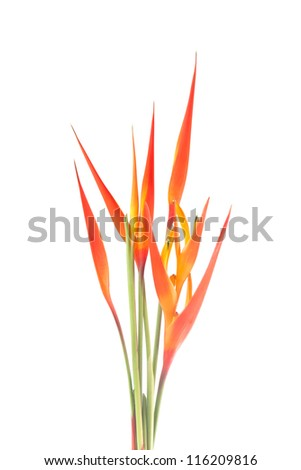 heliconia flower isolate on white background