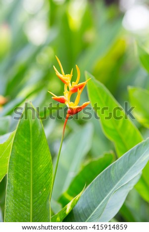 Heliconia flowers in the garden #415914859