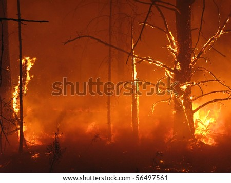 Hell in the forest - stock photo