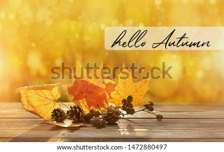 Hello Autumn. beautiful autumn composition. autumn leaves and cones on natural background. fall season concept