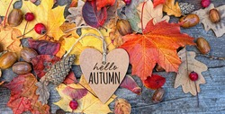 hello autumn. greeting card and fallen leaves, acorns, cones on wooden board. Autumn natural Background. symbol of fall season. flat lay
