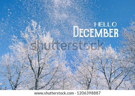 Hello December. beautiful winter background. winter mood. Nature december scene. #1206398887