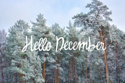 hello december (winter) card