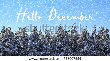 Hello December.Winter forest covered with snow.Snowy pine trees in winter forest.Winter holidays concept. #756007654