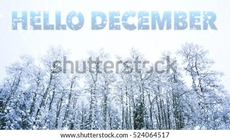 Hello December words on winter background #524064517