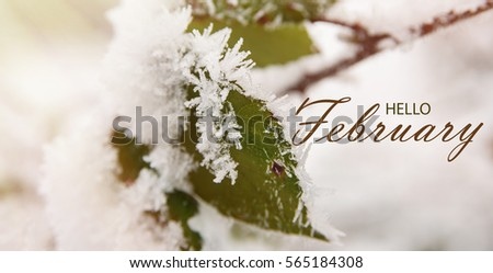 Hello February wallpaper. green leaves of wild rose covered with hoarfrost. Winter background