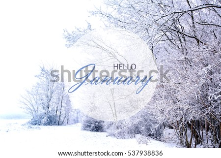 Hello January wallpaper, winter landscape with frozen, snowy forest  #537938836