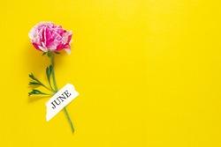 Hello june inscription, pink flower over yellow background. Hello summer.
