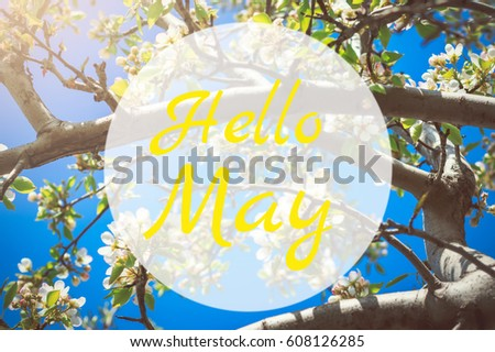 Hello May greeting card with blooming white apple tree flowers #608126285