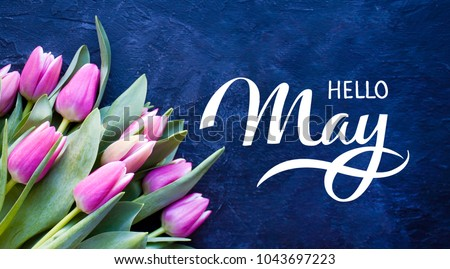Hello May hand lettering card. Spring tulip flowers on dark blue background.