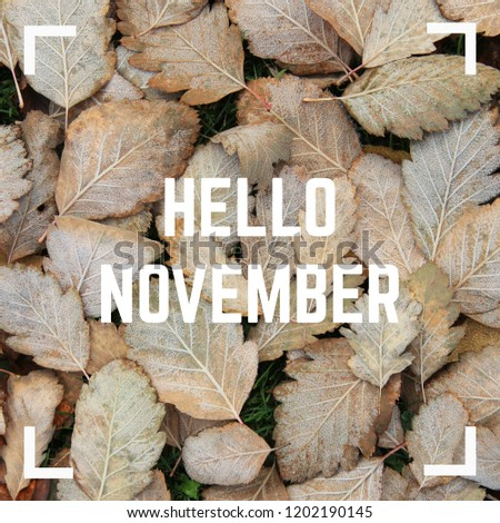 Hello November greeting text on frosty autumn leaves background. Top view.