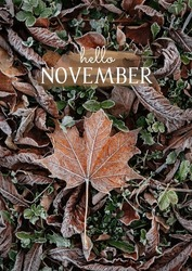 Hello November - text on abstract natural background with autumn frosty leaves. fallen maple leaves, symbol of autumn. Frozen fall season, cold weather. November month concept. top view