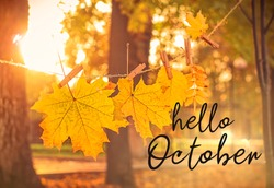 Hello october. autumn natural background. garland of yellow maple leaves in park. beautiful autumnal sunny landscape. symbol of golden fall season.