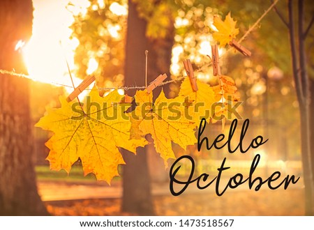 Hello october. autumn nature background. garland of yellow maple leaves in park. beautiful autumnal landscape, golden fall season.  #1473518567