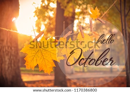 Hello october card. garland of autumn leaves. beautiful autumn composition in park. autumn season. blurred background, soft selective focus.