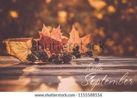 Hello September card. beautiful autumn composition. autumn leaves and cones on natural background. concept of the fall season. soft selective focus