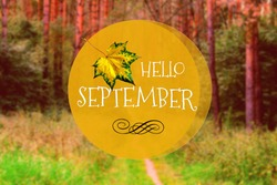 Hello September phrase & yellow maple leaf on autumn forest background. Goodbye summer welcome autumn (fall) September hello on pathway or trail road in forest. September forest way, hello fall season