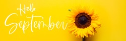 Hello September text and Yellow Sunflower Bouquet on bright Yellow Background, Autumn Concept, Top View, Space for Text, banner size