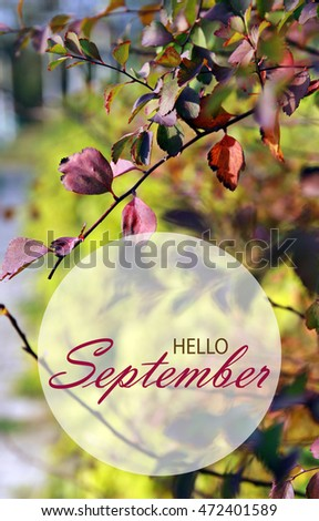 Hello September Wallpaper, Autumn Garden Background With Red And Orange  Leaves #472401589
