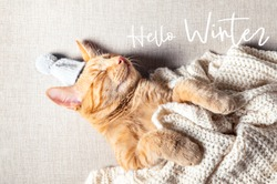 Hello Winter text. Cute little ginger kitten sleeps with woolen knitted tiny hat on. Cat sleeps on its back on the sofa under knitted white blanket. Winter, Christmas or New Year postcard